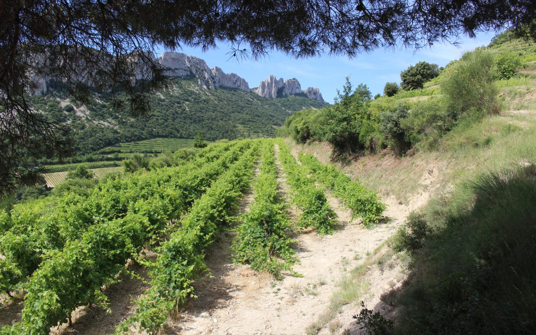 Ugens Vin – økologisk rød AOC Beaumes-de-Venise fra Domaine de Fenouillet
